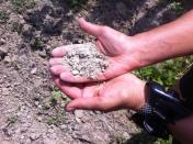 Clos Figuiers - soil